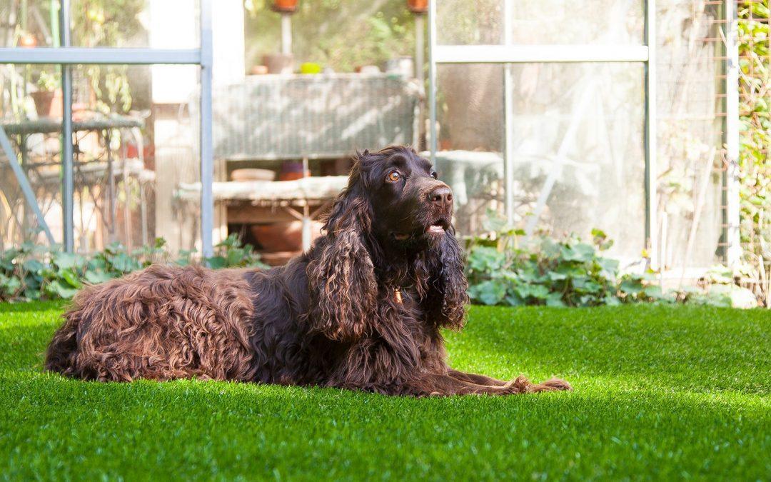 Césped artificial para perros, ¿tiene características especiales?