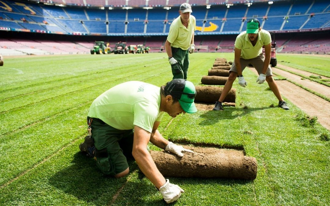 Hybrid grass: what it is and where it is used