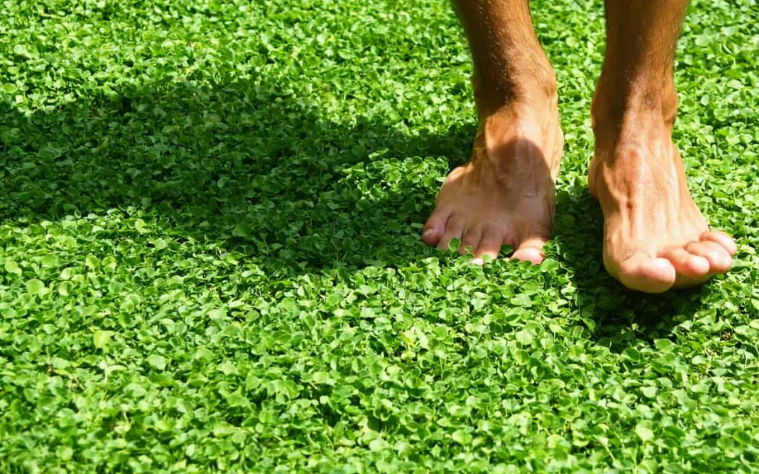 Natural alternatives to conventional lawns in gardens