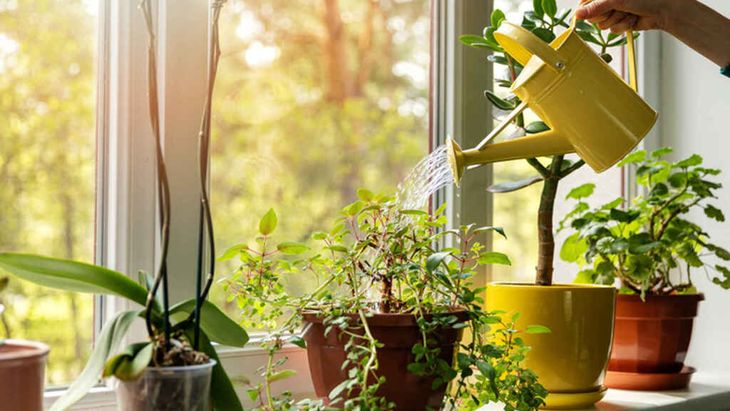 How to care for houseplants so that they live longer?